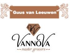 Logo Chrysantenkwekerij Guus van Leeuwen
