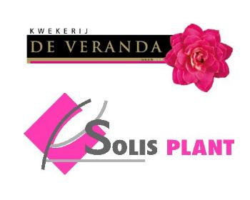 Logo Kwekerij de Veranda en Solisplant